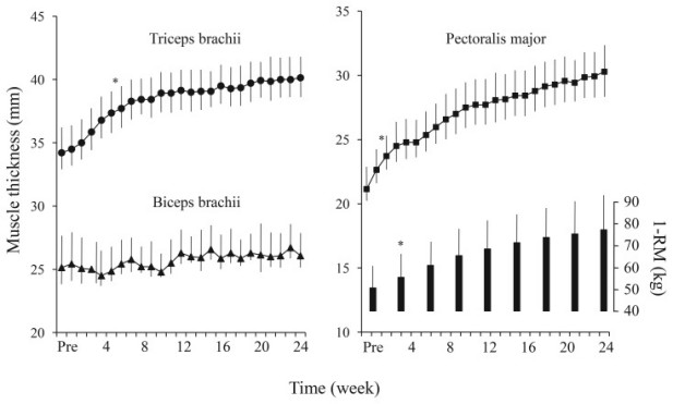 time course of changes in muscle thickness over time